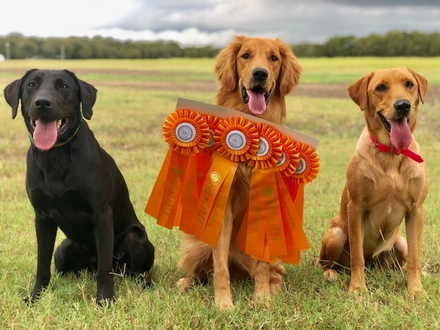 Gun Dog Awards